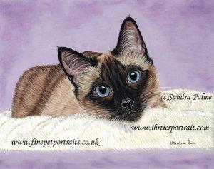 Thai cat pastel portrait