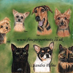 Dogs and cats pet portrait montage
