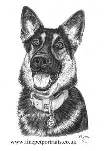 German Shepherd charcoal drawing dog portrait