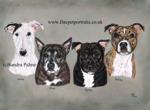 Staffies dog portrait