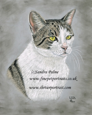 Cat head pet portrait