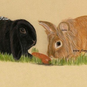 Rabbits pet portrait