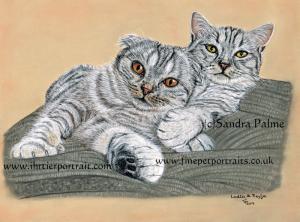 Scottish Fold cats portrait