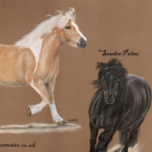 Ponies pastel portrait