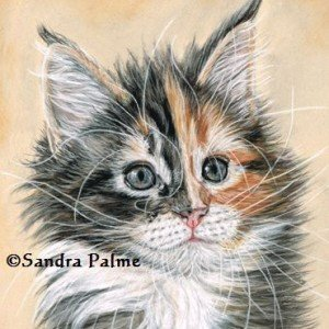 Maine Coone kitten portrait in pastels