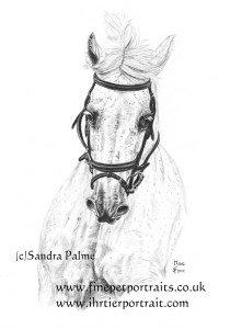 Horse charcoal portrait