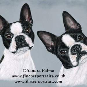 Boston Terriers portrait in pastels