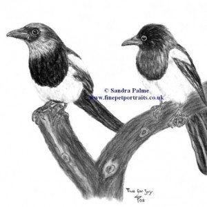 Magpies - Two for Joy charcoal drawing