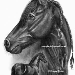Friesian Horse portrait charcoal