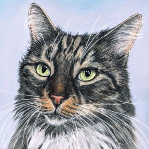 Tomcat pastel painting