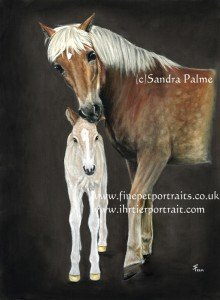 Haflinger mare and foal horse portrait