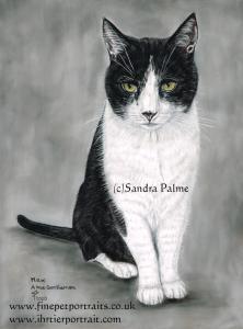 Max Gentleman Cat Portrait