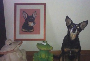 Podenco Maya with portrait