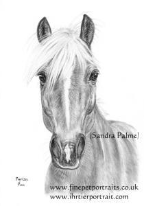 Merlin Haflinger horse gelding charcoal portrait