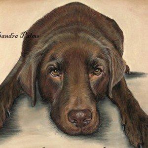 Chocolate Labrador drawing