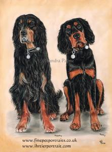 Gordon Setters Murphy Paddy dog portrait
