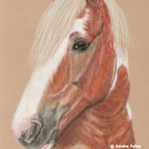 Skewbald Horse drawing pastels