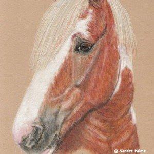 Skewbald Horse drawing pastels