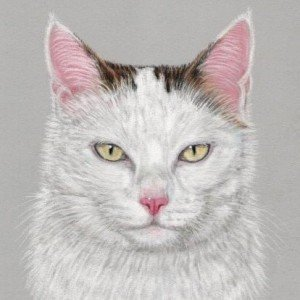Cat drawing in pastels