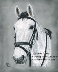 Oisin horse portrait