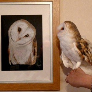 Barn Owl Oliver with bird portrait