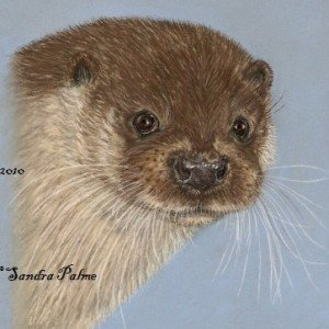 European Otter portrait