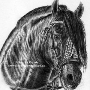 P.R.E. Horse stallion portrait charcoal drawing