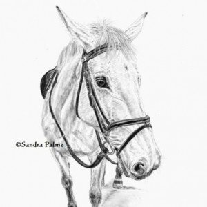 Eventing Horse Drawing