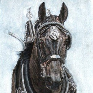 Percheron stallion watercolour portrait