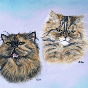 Persian Cats drawing
