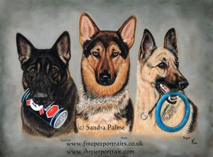 Police Dogs Portrait German Shepherds