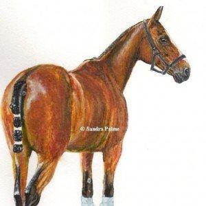 Polo Pony Watercolour painting