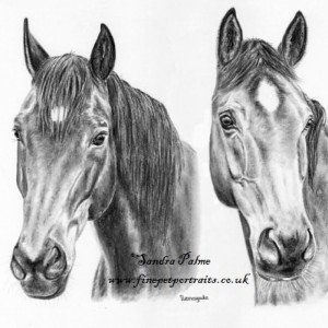Horse drawing charcoal