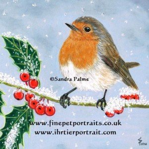 Robin on holly in snow drawing