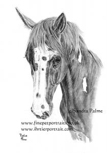 Horse Portraits Charcoal Gallery