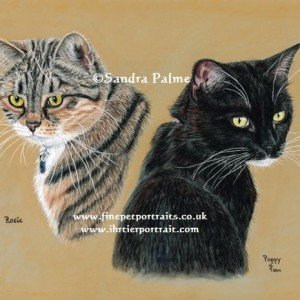 Double cats portrait in pastels.