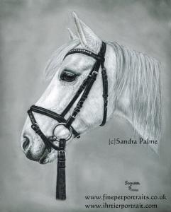 Grey gelding Samson Horse Portrait