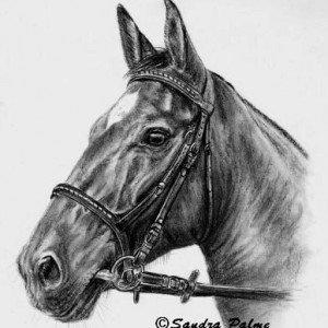 Horse portrait charcoal