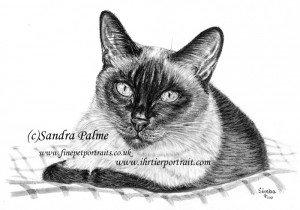 Thai cat Simba charcoal drawing