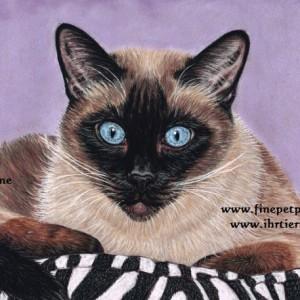 Classic Siamese Cat portrait
