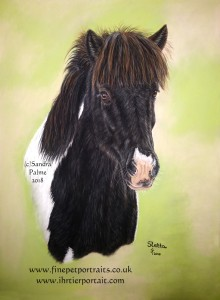 Iclandic Horse portrait