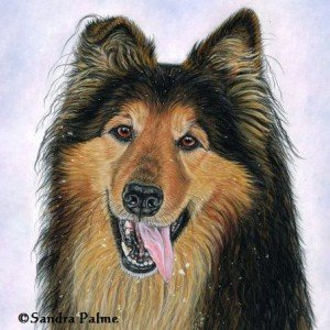 Collie German Shepherd dog portrait