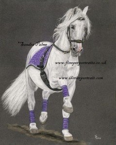Spanish Stallion Dressage