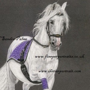 Spanish Stallion Dressage horse drawing