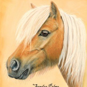 Shetland Pony mare portrait