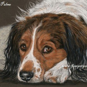 Kooiker Hound dog portraits