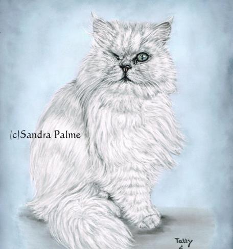 Long-haired Cat Tatty Portrait