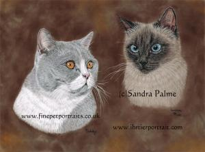 British Shorthair and Siamese Cats Portrait