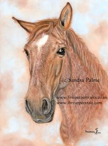 Theresa horse mare portrait