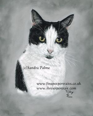 Cat Tilly Portrait
